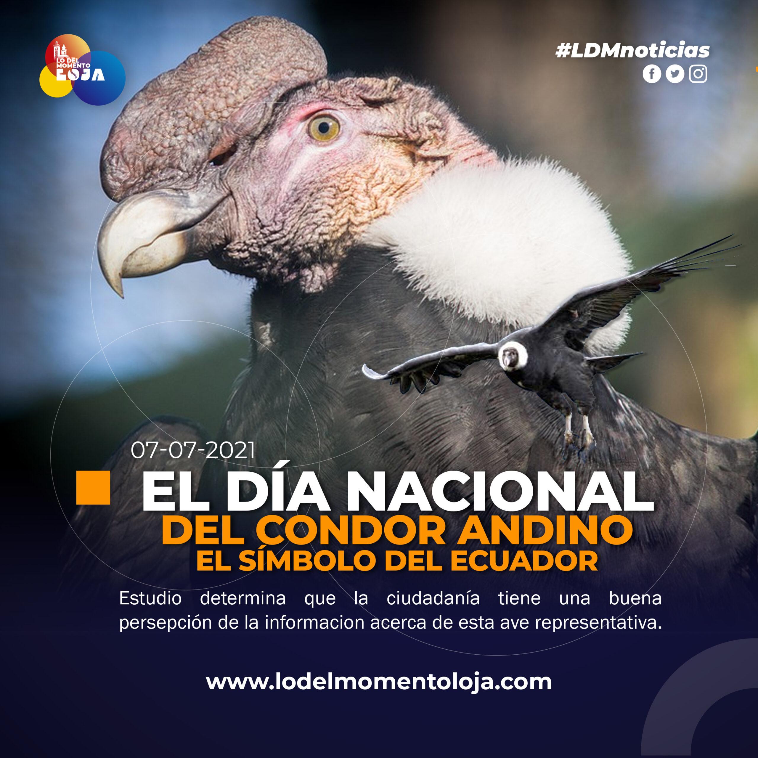 Percepciones de la población urbana sobre el cóndor andino en el Ecuador