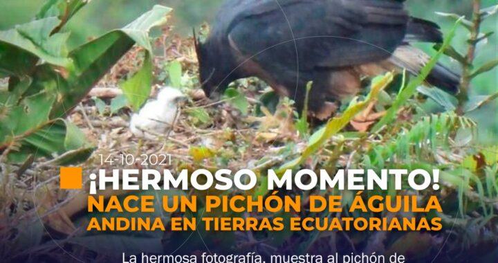Un nuevo integrante a la familia de Águilas Andinas