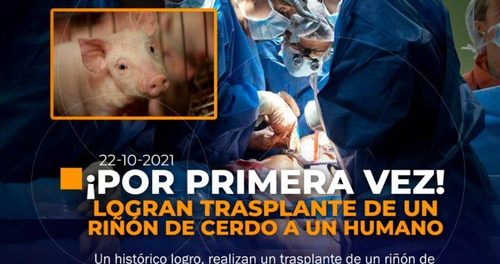 Histórico trasplante de riñón a un humano