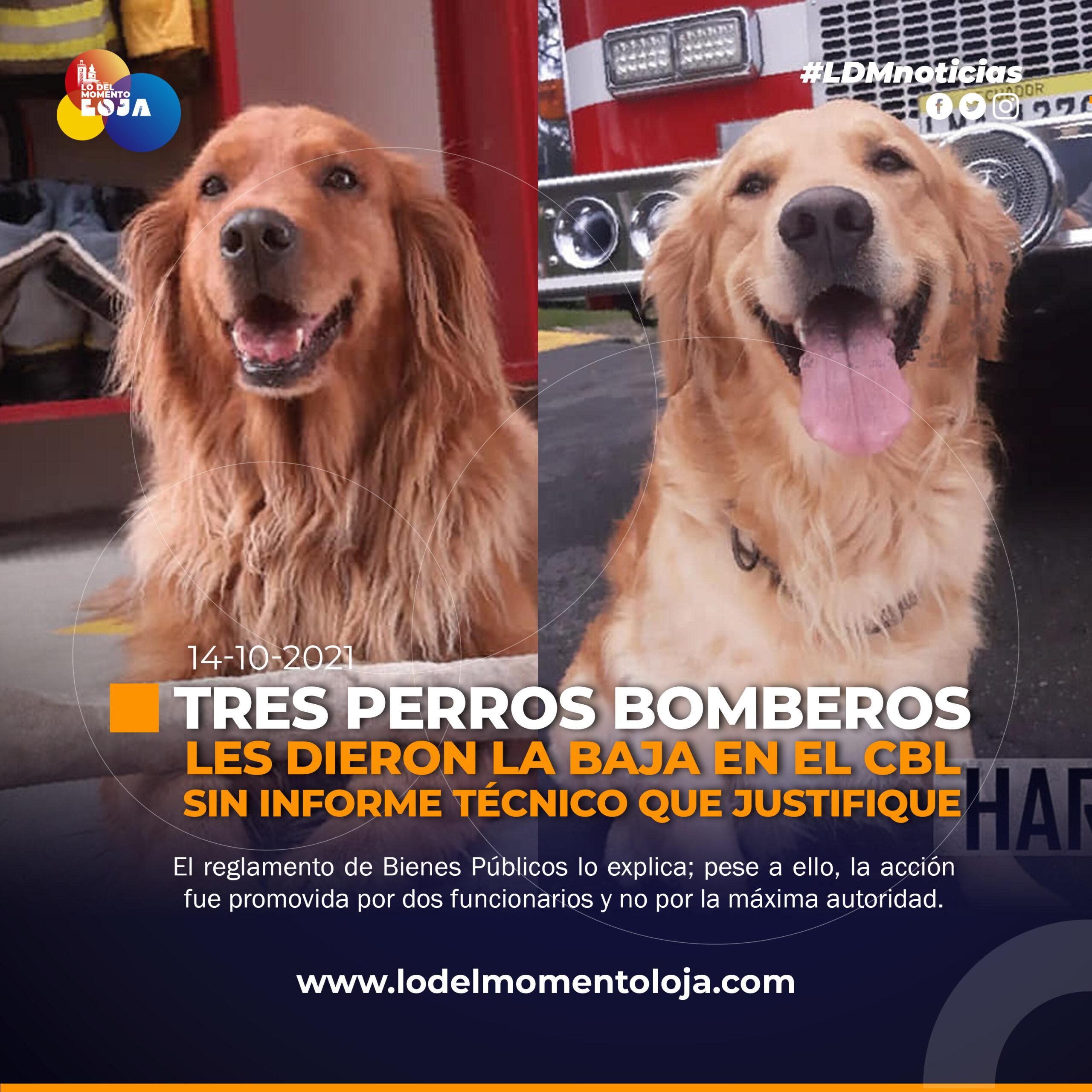 Perros bomberos fueron puestos en adopción